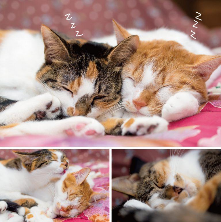 猫_寝る子-01