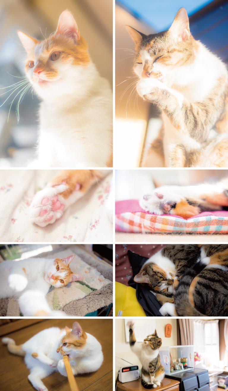 猫_かわいい-01